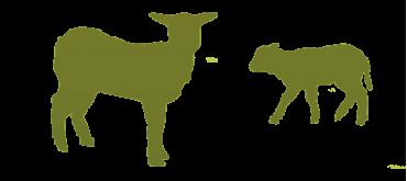 Colis d'agneau frais