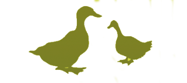 Colis 100% canard - Frais 100% canard